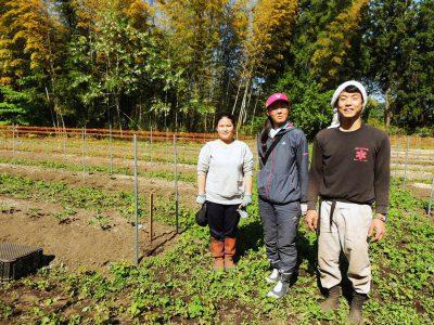 まちの花ダリアの栽培に励む地域おこし協力隊 (東白川郡塙町)